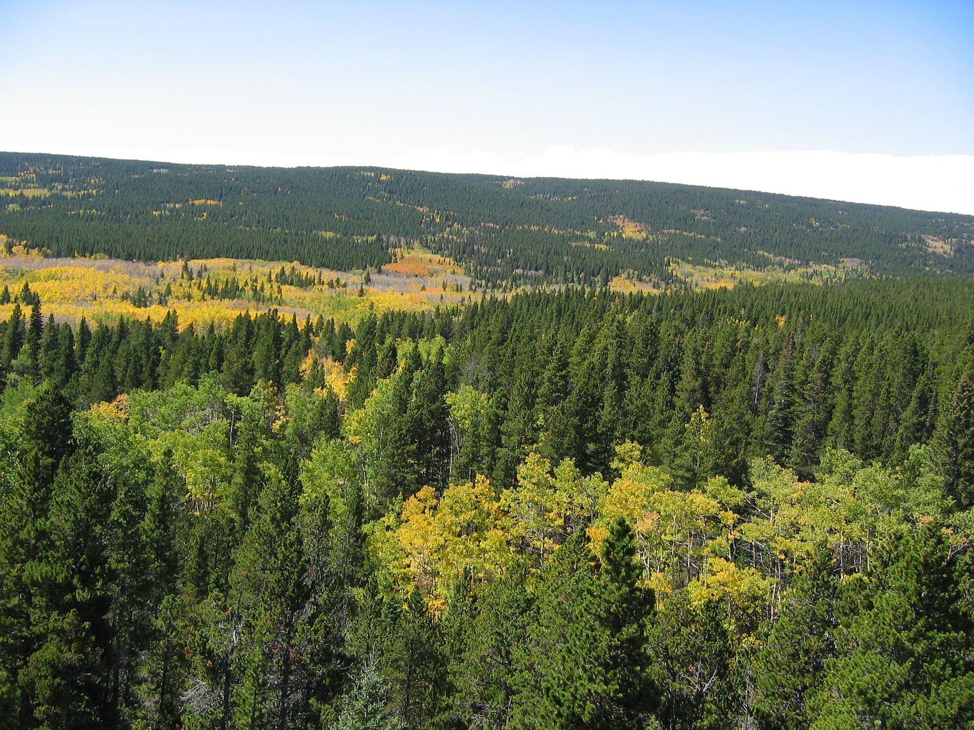 Air view of Evergreen Colorado showing confers